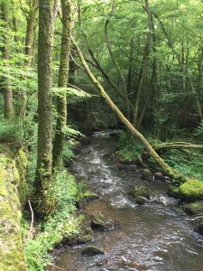 20160709 ruisseau
