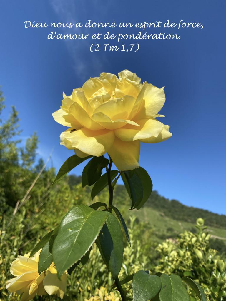 20200603 Rose